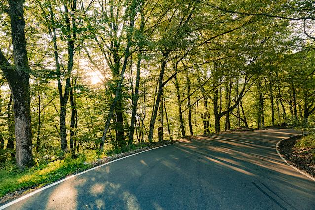 Krasnaya Polyana forest sun rays road sunset soon silence photo Igor Novik