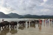 Unique in Lombok, Selfie with Buffalo in Beach