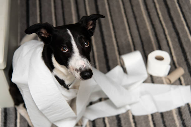 House Training Your Puppy – Successfully