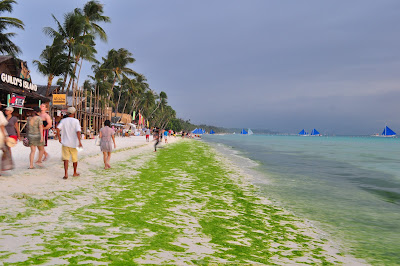 Green Algae in Boracay