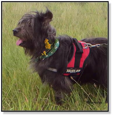 Blumenschmuck für Hunde