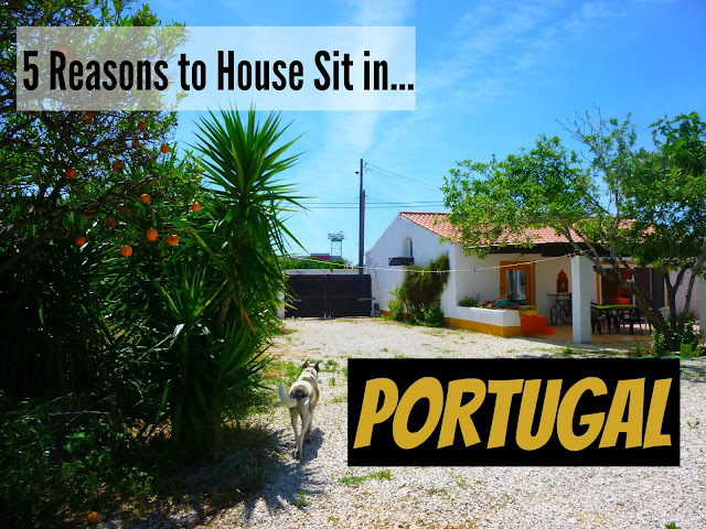 house sitting in Portugal