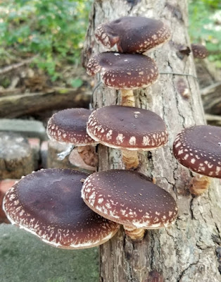 Mushroom Supplier Company in Salem