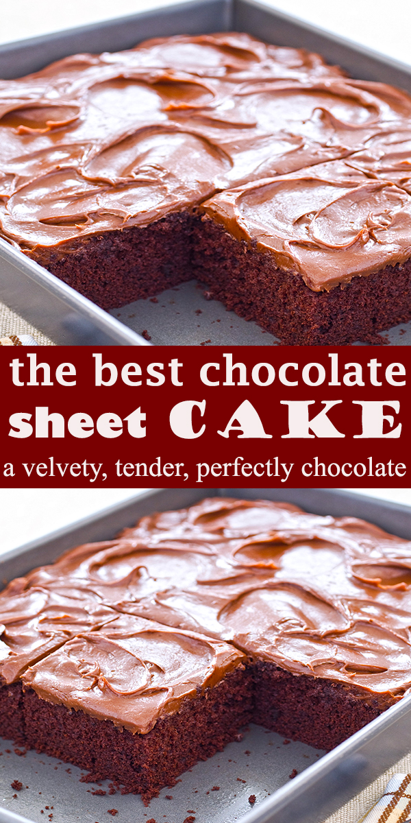 the best chocolate sheet cake #thebest #chocolate #sheet #cake #dessert #thebestchocolatesheetcake