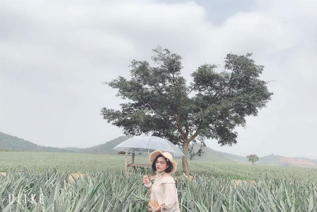 Những cánh đồng check in cực hot dành cho giới trẻ