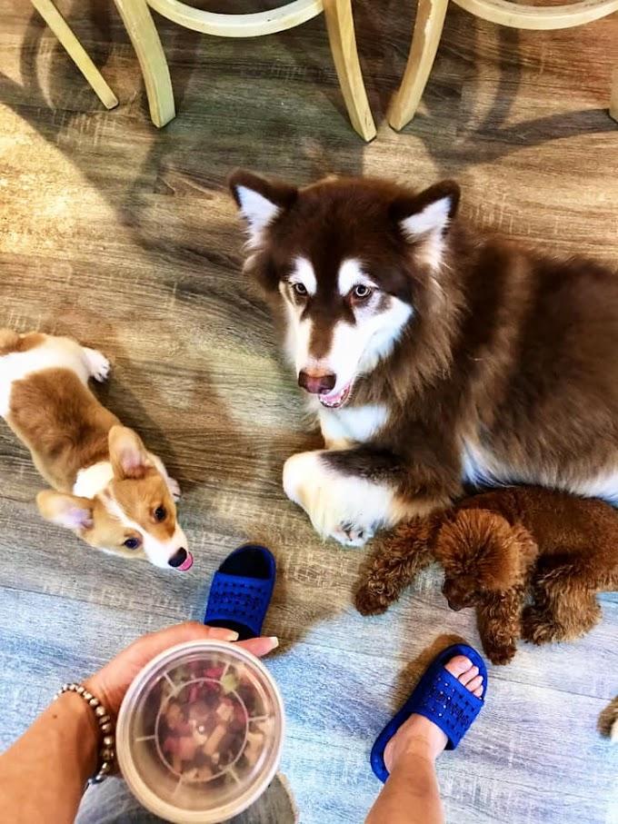 Cherry Pet Coffee Quận 10 - Quán cafe thú cưng