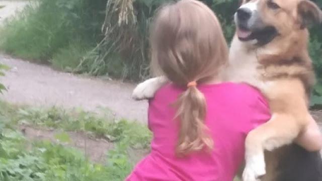 Бездомный пес спас детей ценой своей жизни
