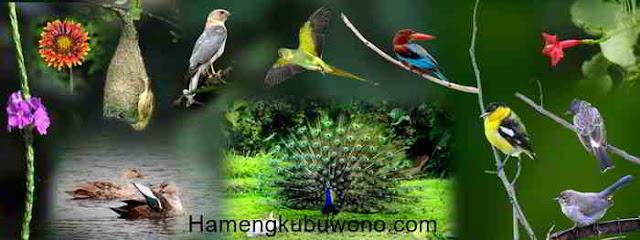 Indonesia Bio Diversity dalam Indonesia dimata dunia 2016