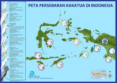 Habitat burung kakatua indonesia