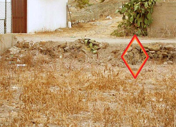 Imagen de Test Visual: Encuentra al gato camuflado como verdadero ninja 11