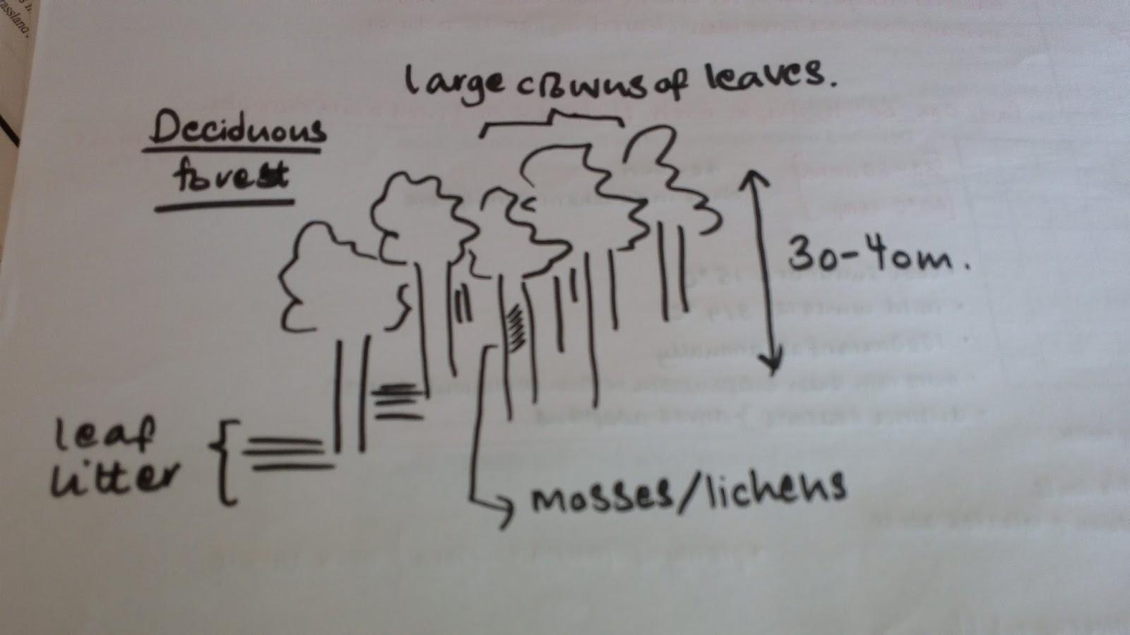 deciduous forest biome a climatic climax [ 1600 x 900 Pixel ]