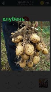 275 слов мужчина несет клубень картофеля 10 уровень