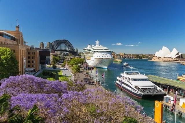 The brilliant purple phoenix season in Sydney