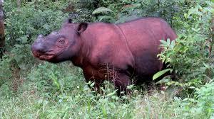 Salah satu binatang khas Sumatra