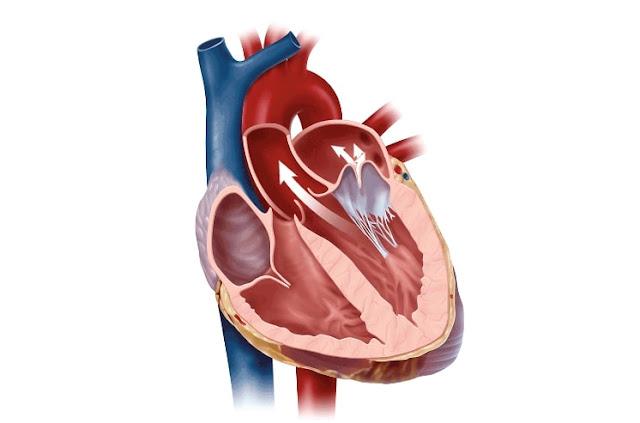 Gejala Penyakit Katup Jantung