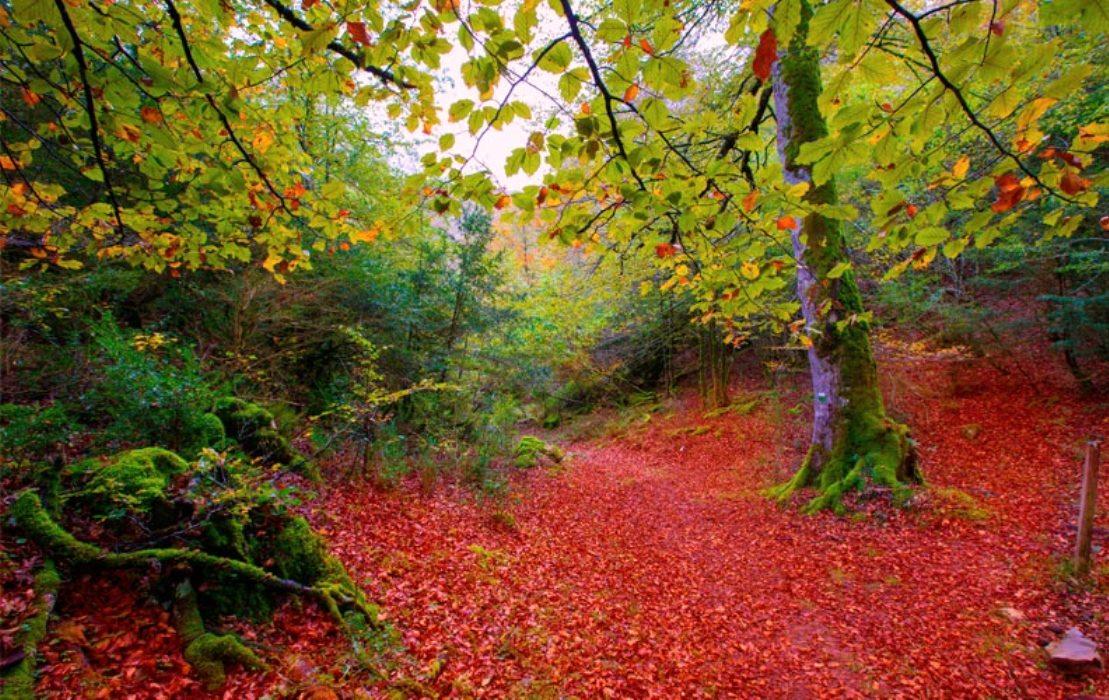 Jardines con encanto shinrin yoku o ba o de bosque los - Jardines con encanto ...