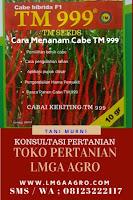 CABE KERITING TM 999, CARA MENANAM CABE TM 999, JUAL BENIH CABE TM 999, LMGA AGRO