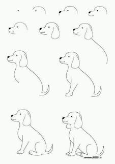 تعلم رسم حيوانات و طيور بكل سهولة خطوة بخطوة