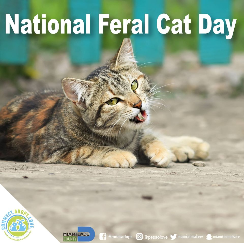 National Feral Cat Day Wishes Beautiful Image