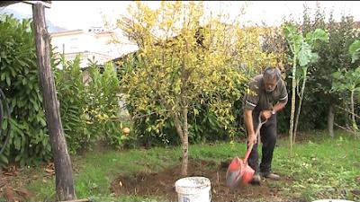 Plantando uma romanzeira