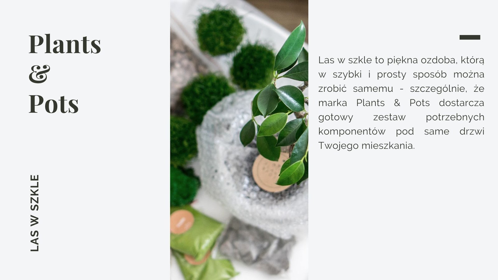 domowy las w szkle handmade w słoiku akcesoria elementy cena gdzie kupić diy jak zrobić las w szkle krok po kroku jak pielęgnować las w słoiku kiedy podlewać gdzie ustawić zwalczanie szkodników i pleśni