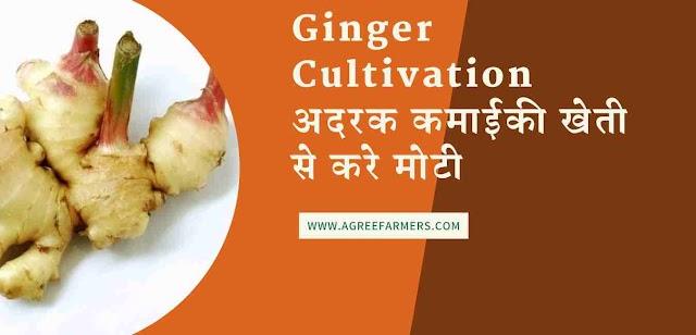Ginger Cultivation अदरक कमाईकी खेती से करे मोटी