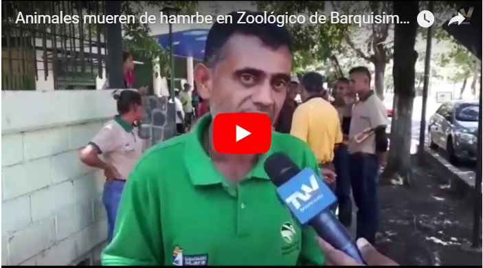 Denuncian que muchos animales han muerto de hambre en el Zoológico de Barquisimeto