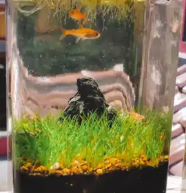 saran tema aquascape toples