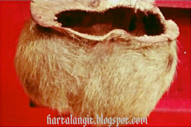 gambar kantong macan asli