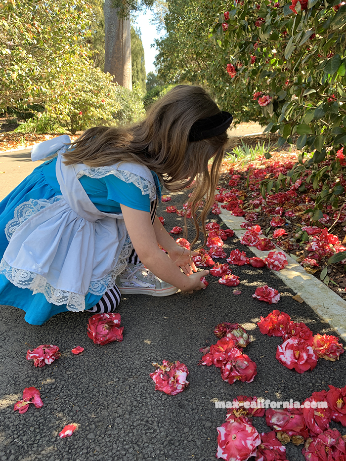 DIY Alice in Wonderland costume   • www.max-california.com