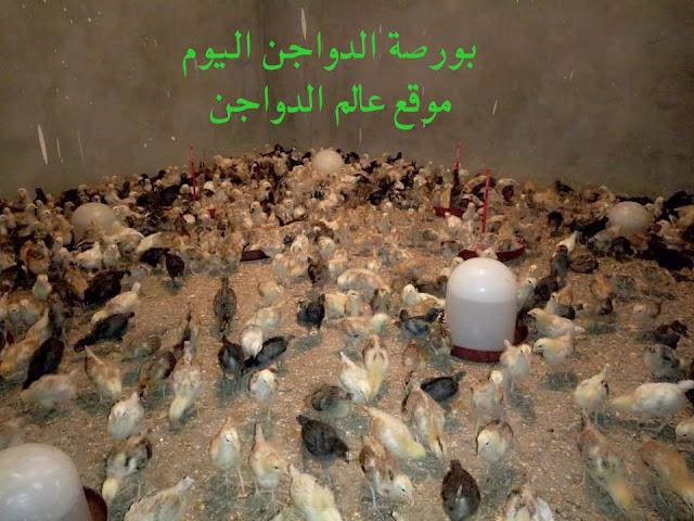 أسعار الدواجن اليوم الاثنين 27 يناير 2020: أسعار بورصة الدواجن اليوم في مصر