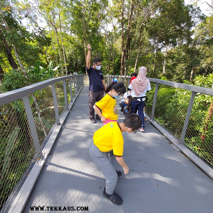 Canopy Walk Penang The Habitat