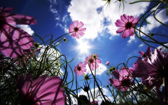 Fragancias, familia olfativa floral