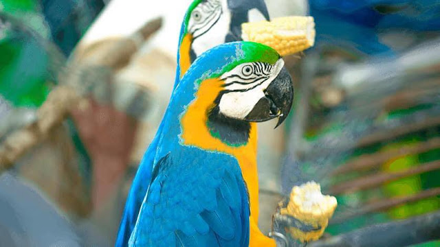 විදේශීය පක්ෂීන් වෙසෙන දේශීය නවාතැන - හම්බන්තොට කුරුළු උයන 🦜🦃🦩 (Hambantota Bird Sanctuary) - Your Choice Way