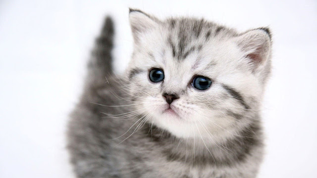 cute cat wallpaper hd