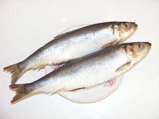 scrumbie, peste, retete cu sardina, preparate din sardina, retete culinare,