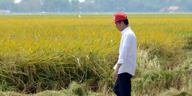 Ujang Komarudin: Mengerikan, Gembar-gembor Swasembada Pangan Tapi Jauh Tertinggal Dari Negara Lain