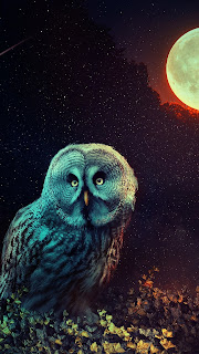 Owl The Night Guard Mobile HD Wallpaper