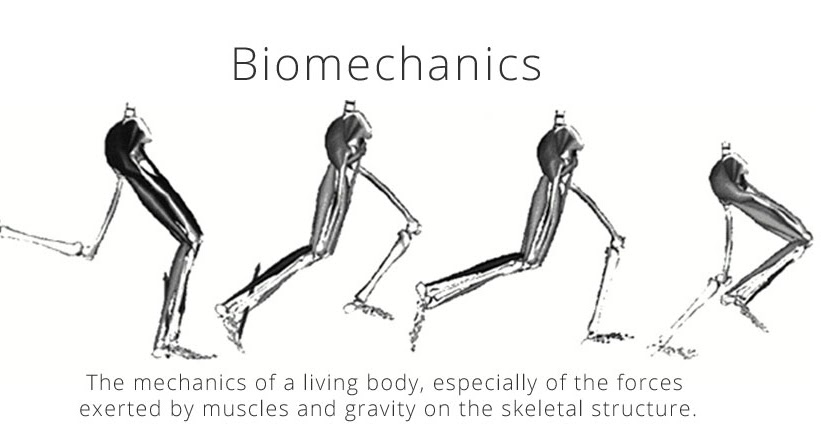 Biomechanical Frame Of Reference - Page 2 - Frame Design & Reviews ✓