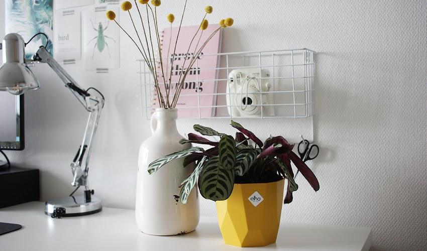 Groen in huis met de plantenpotten van elho