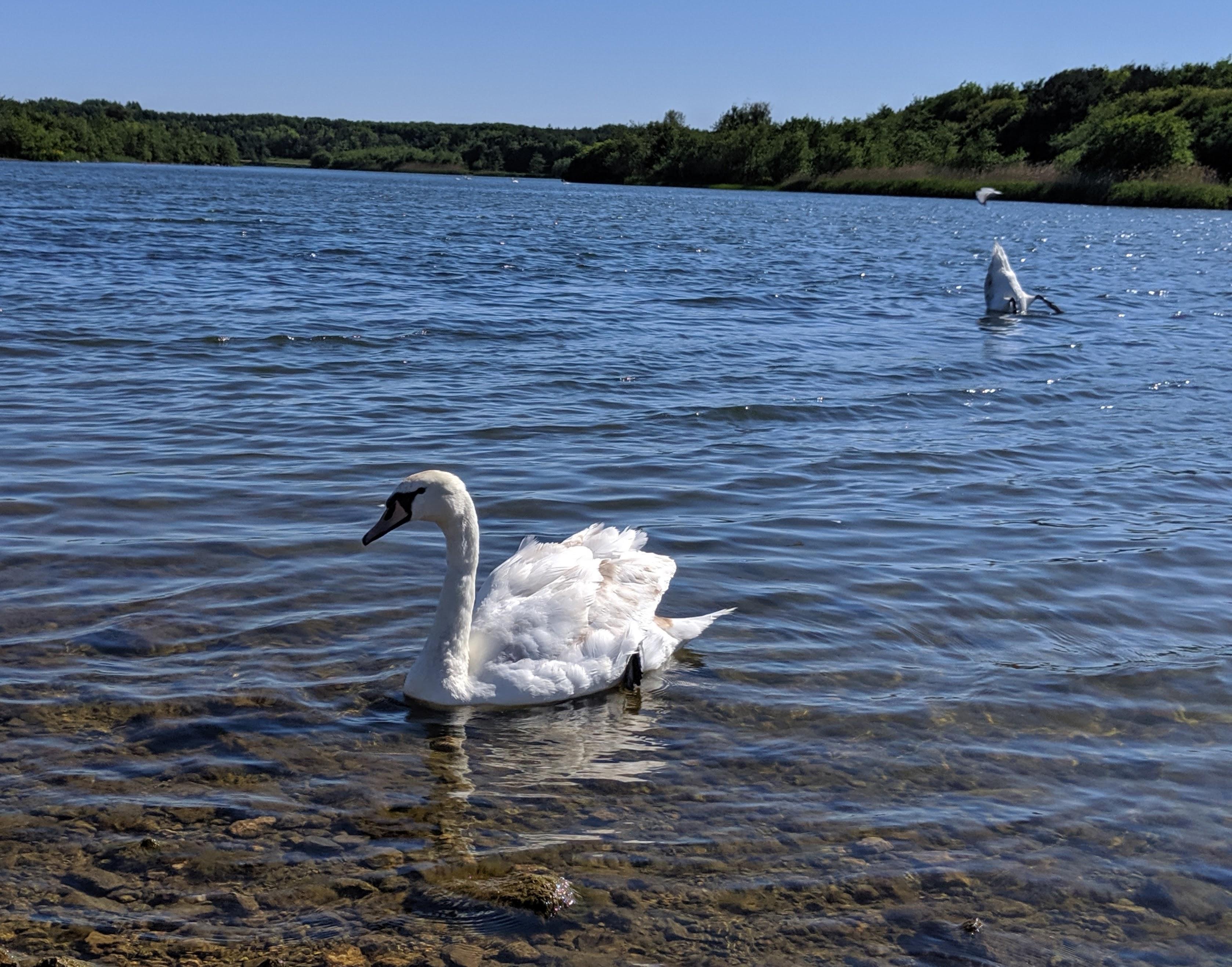 Queen Elizabeth II Country park walk