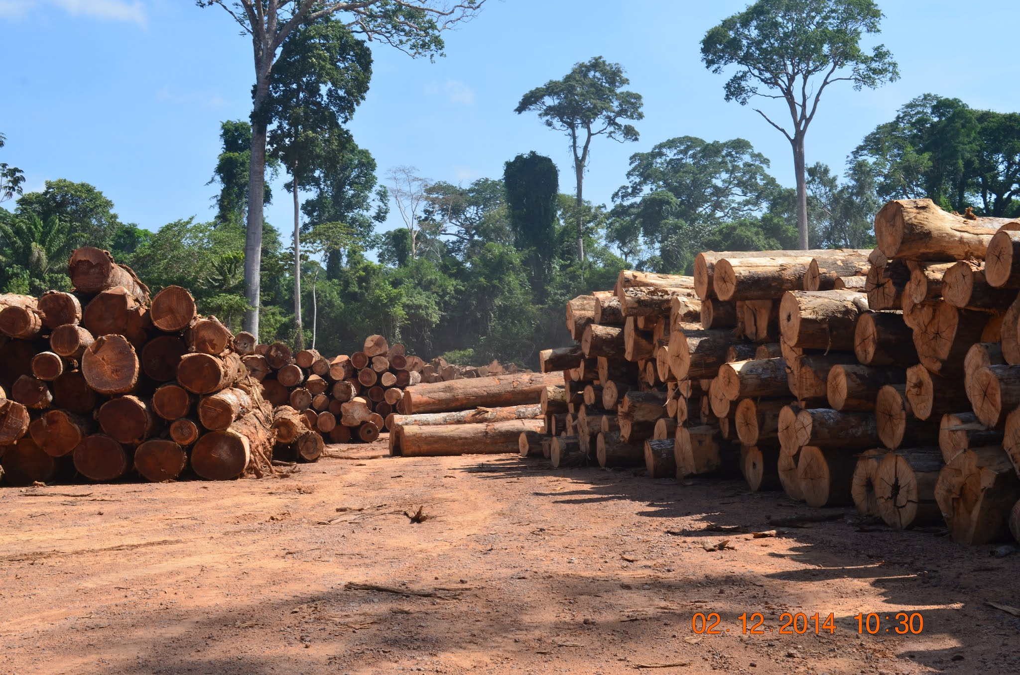 Pesquisa sobre exploração madeireira na Flona Tapajós sai na Animal Conservation