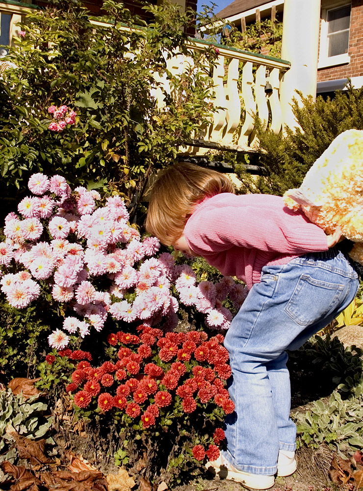 A child smelling the chrysanthemums in a wildly overgrown victorian garden.