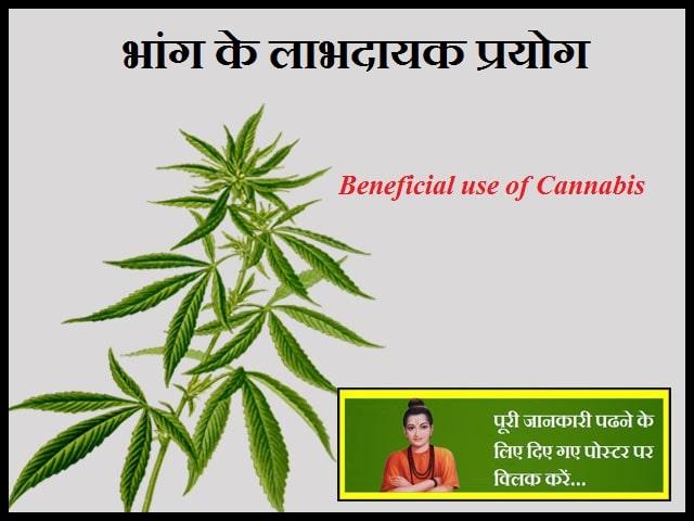 Beneficial use of Cannabis-भांग के लाभदायक प्रयोग