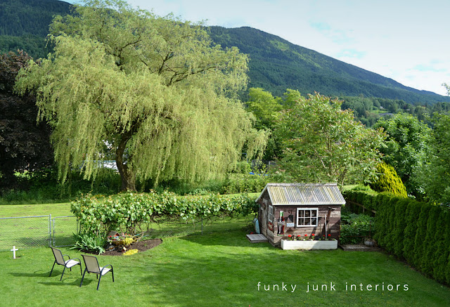 gorgeous backyard mountain view with a huge weeping willow and rustic garden shed