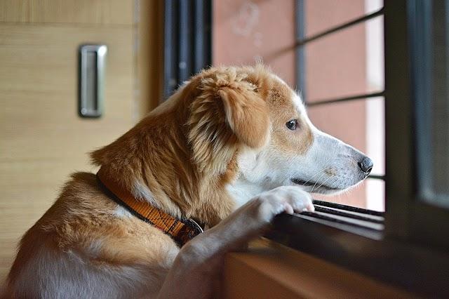 Confinamento na pandemia causa estresse e ansiedade também nos pets
