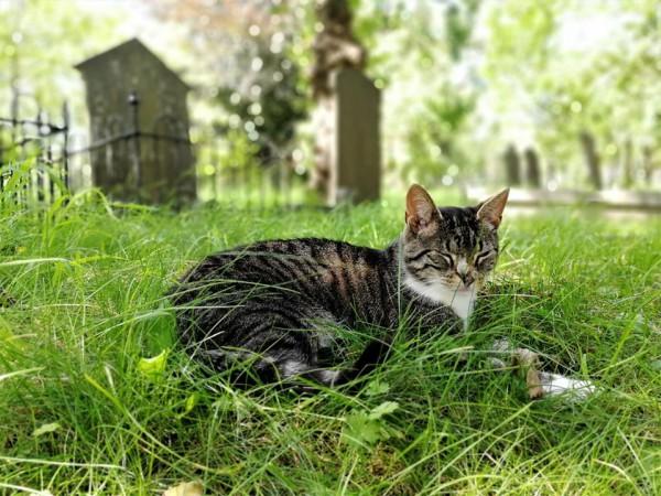 begraafplaats groenesteeg