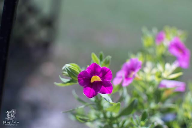 Spring flowers (©Jenny Bell @ Flutterbye Chronicles)