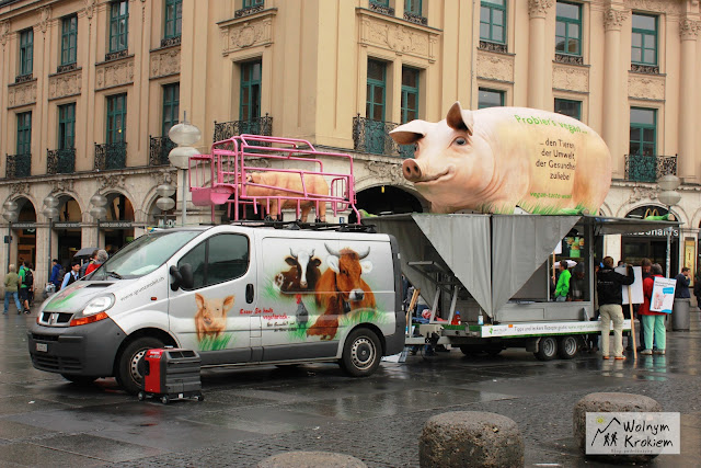 Świnia na samochodzie