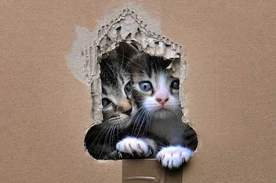 pareja hermosa de gatos